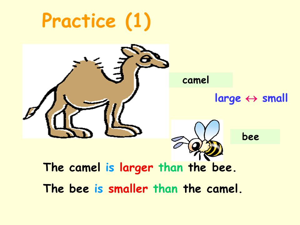 Practice (1) The camel is larger than the bee.
