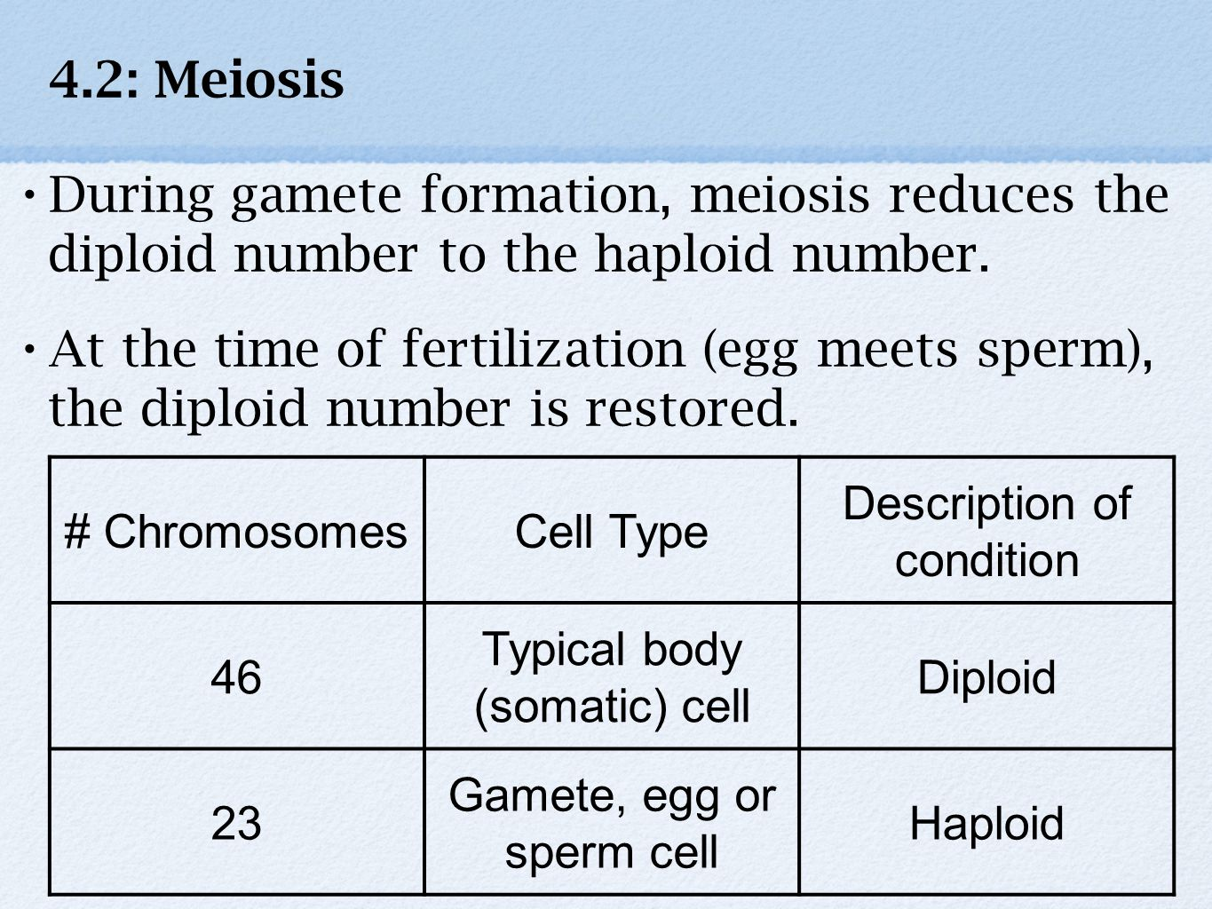 During gamete formation, meiosis reduces the diploid number to the haploid number.