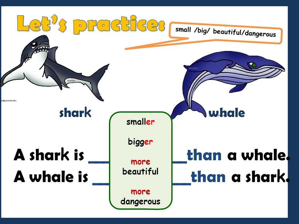 Let's practice: A shark is _____________than a whale.