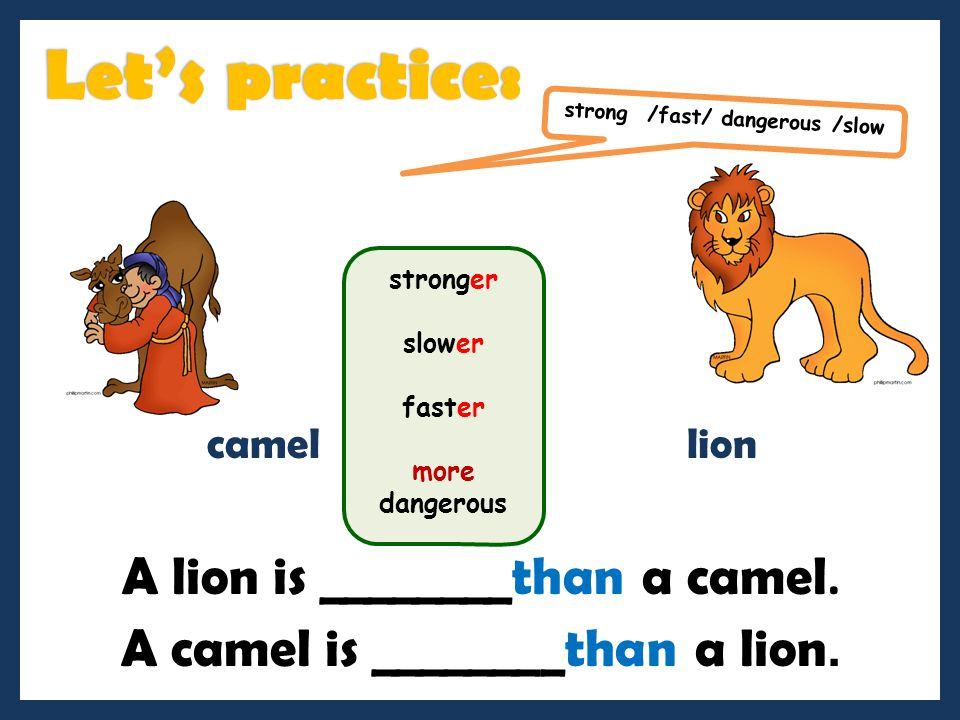 Let's practice: A lion is ________than a camel.