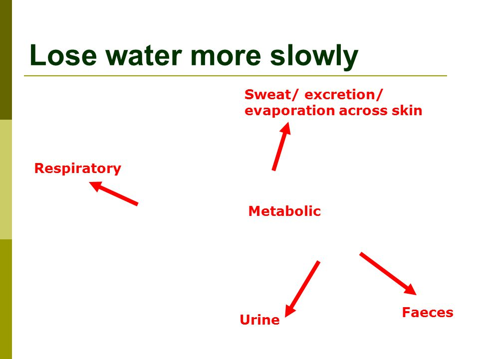 Lose water more slowly Sweat/ excretion/ evaporation across skin