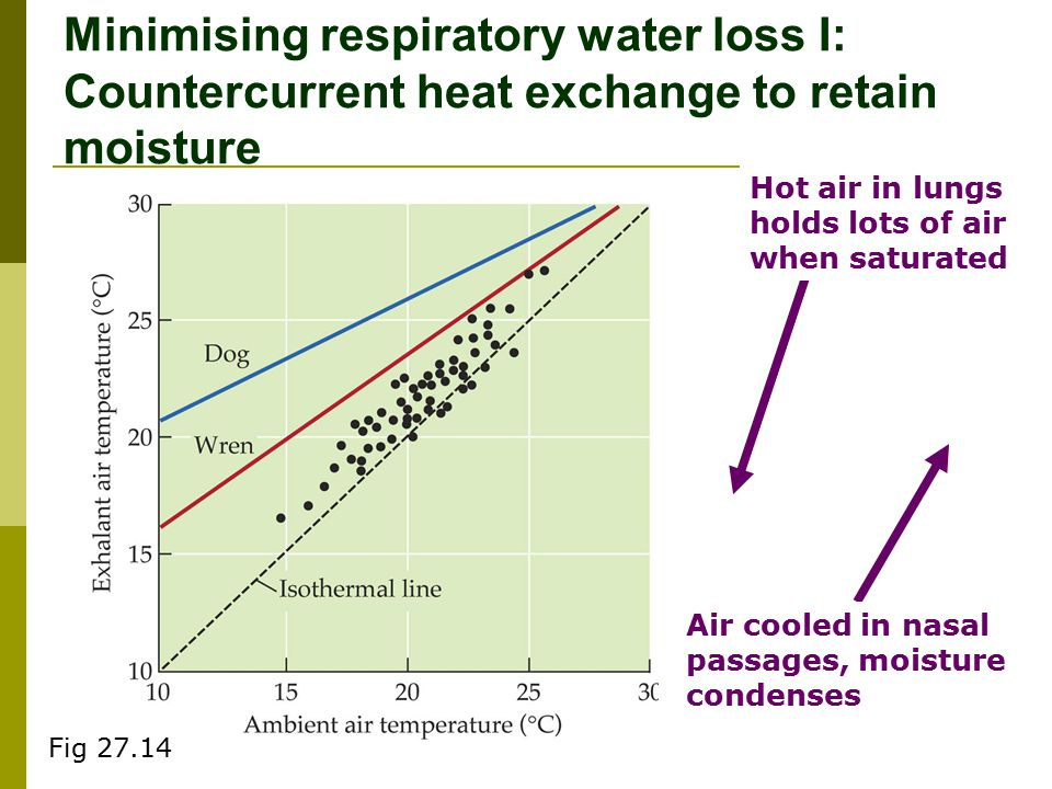 Minimising respiratory water loss I: Countercurrent heat exchange to retain moisture