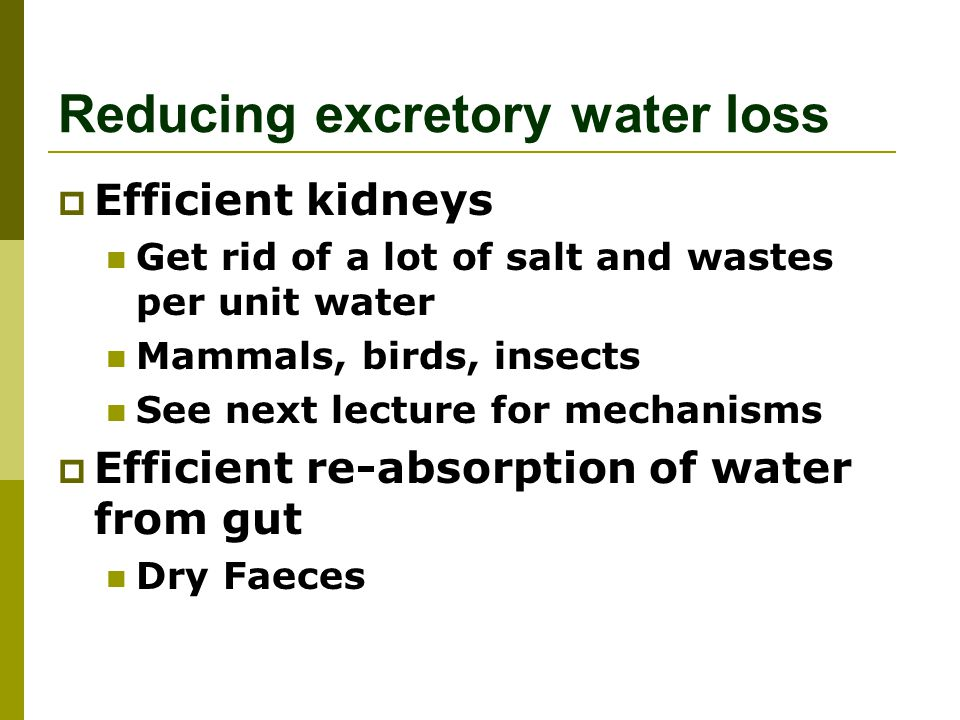 Reducing excretory water loss
