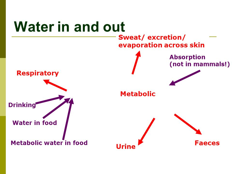 Water in and out Sweat/ excretion/ evaporation across skin Respiratory