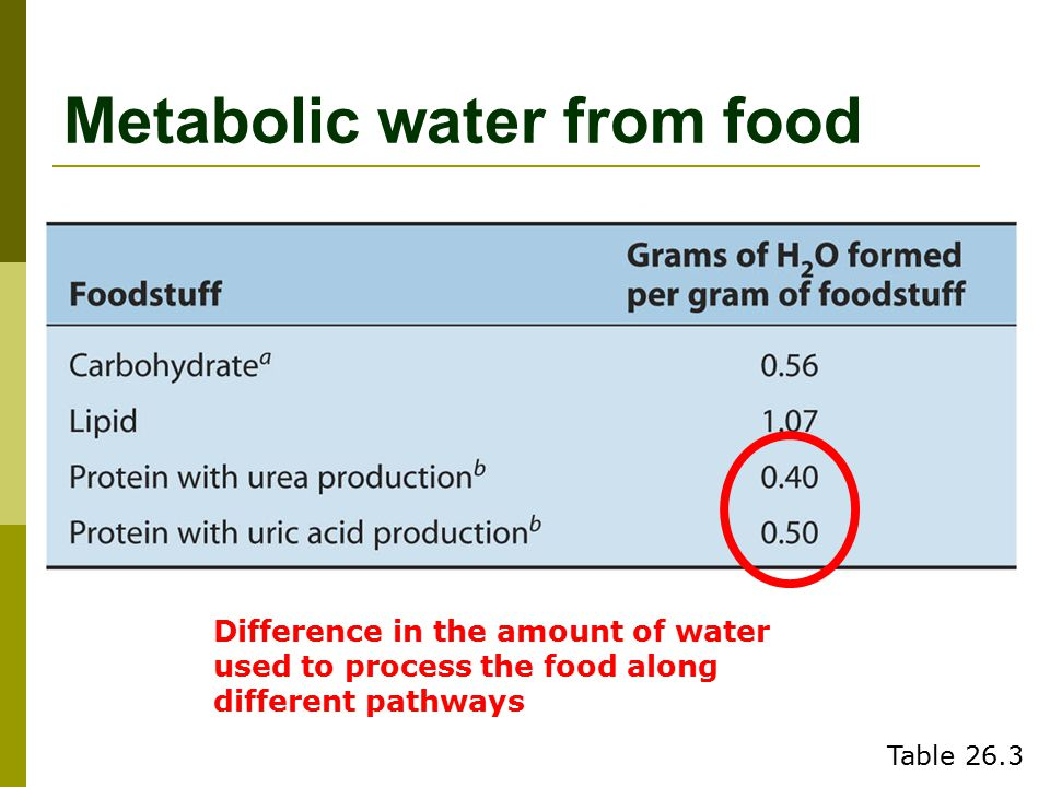 Metabolic water from food