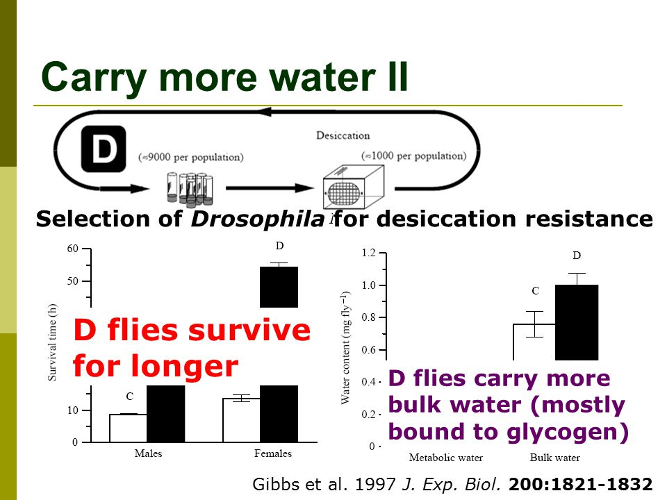 Carry more water II D flies survive for longer