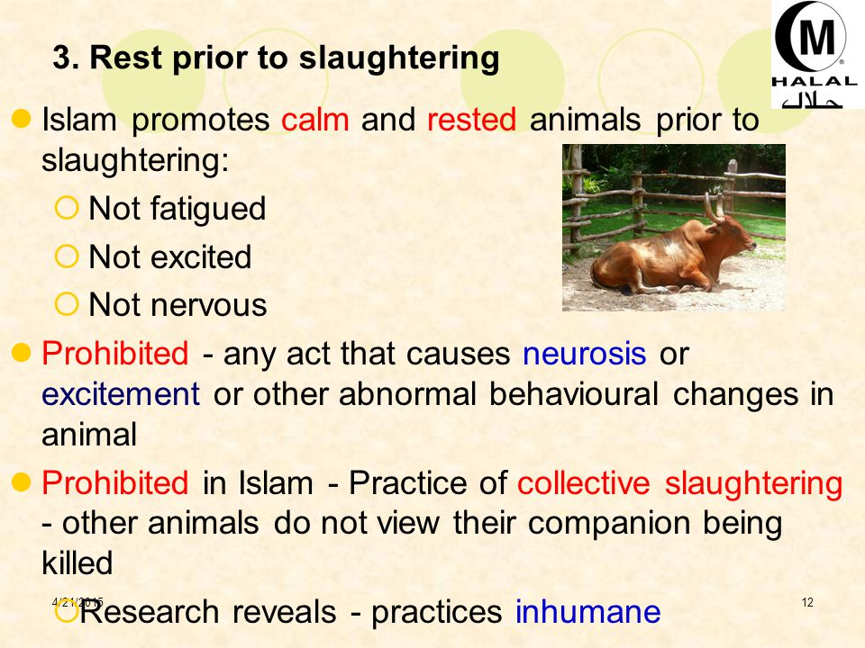 3. Rest prior to slaughtering
