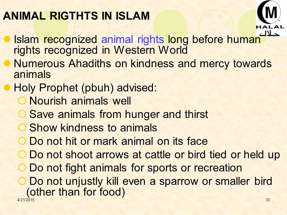 ANIMAL RIGTHTS IN ISLAM