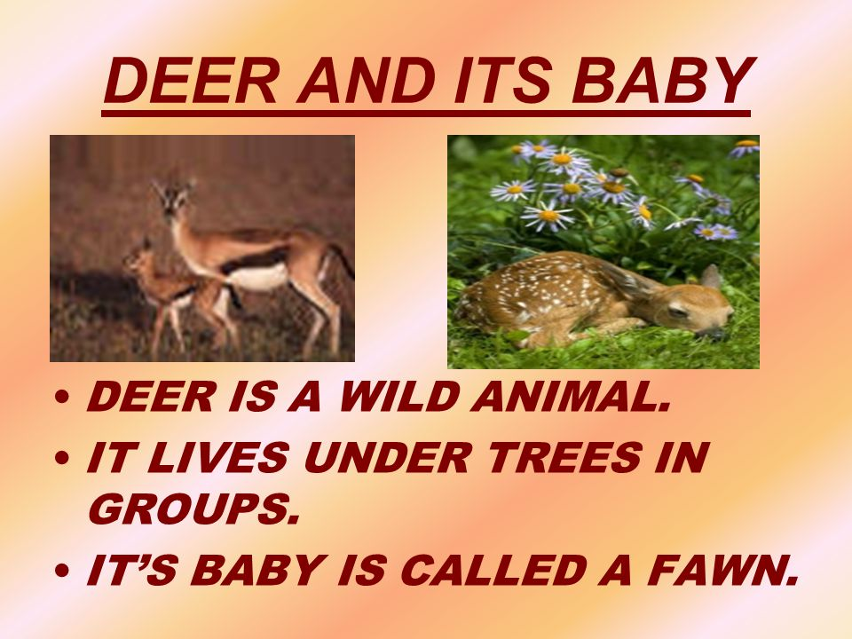 DEER AND ITS BABY DEER IS A WILD ANIMAL.