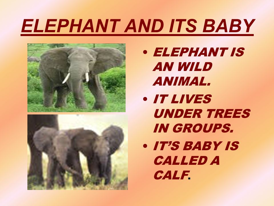 ELEPHANT AND ITS BABY ELEPHANT IS AN WILD ANIMAL.