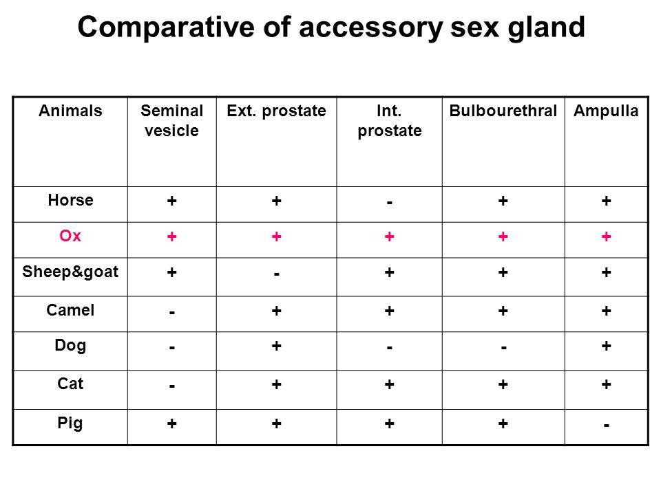 Comparative of accessory sex gland