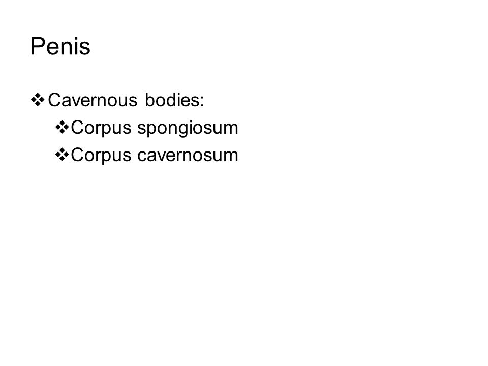 Penis Cavernous bodies: Corpus spongiosum Corpus cavernosum