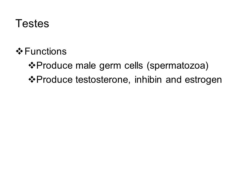 Testes Functions Produce male germ cells (spermatozoa)