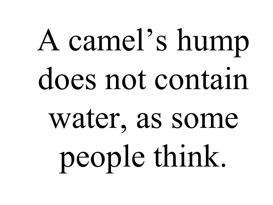 A camel's hump does not contain water, as some people think.