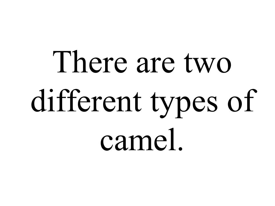There are two different types of camel.