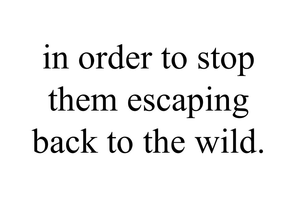 in order to stop them escaping back to the wild.