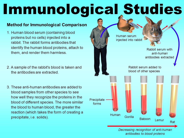 Immunological Studies