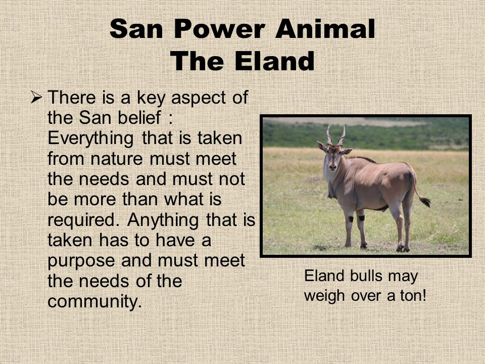 San Power Animal The Eland