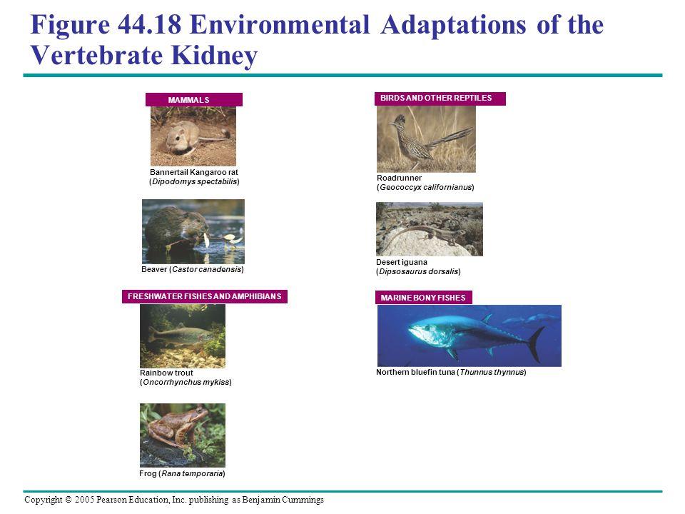 Figure 44.18 Environmental Adaptations of the Vertebrate Kidney