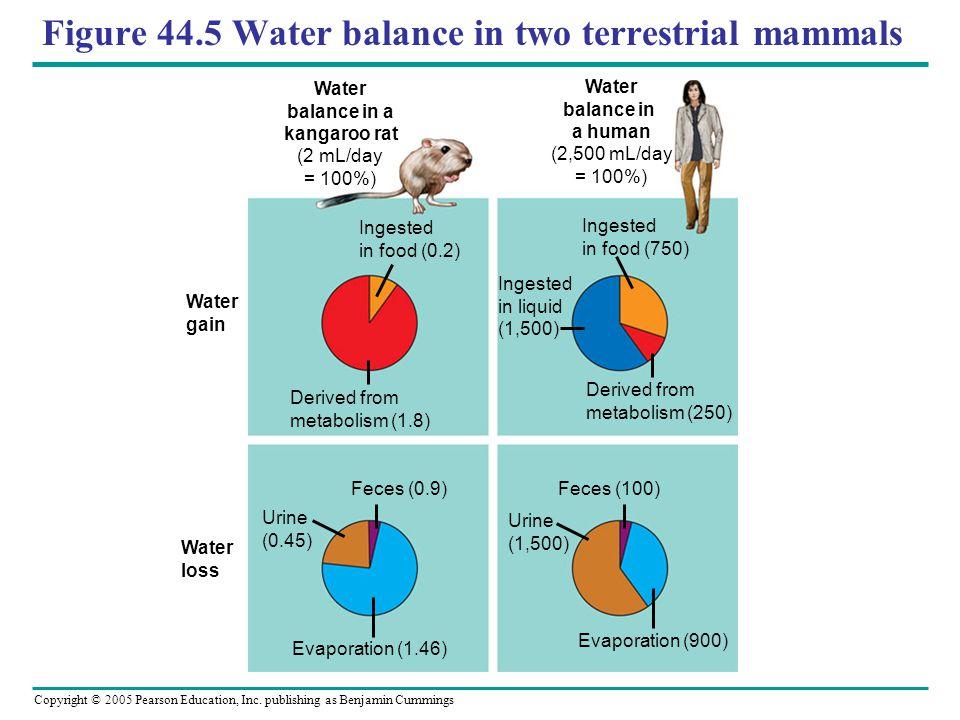 Figure 44.5 Water balance in two terrestrial mammals