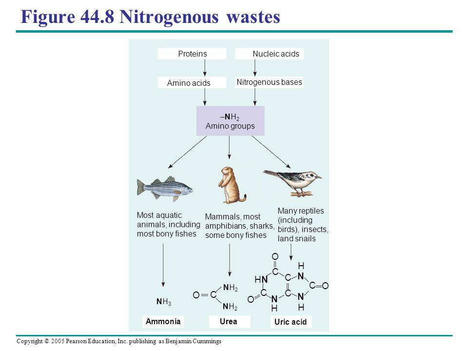 Figure 44.8 Nitrogenous wastes