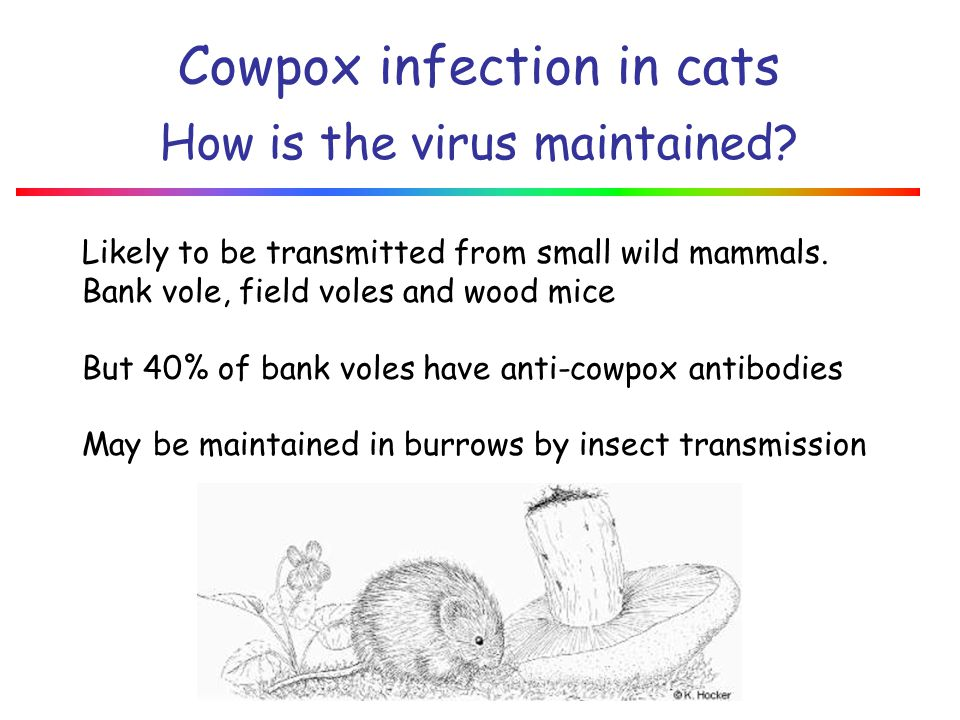 Cowpox infection in cats