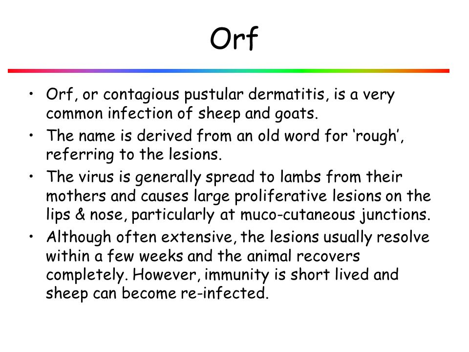 Orf Orf, or contagious pustular dermatitis, is a very common infection of sheep and goats.