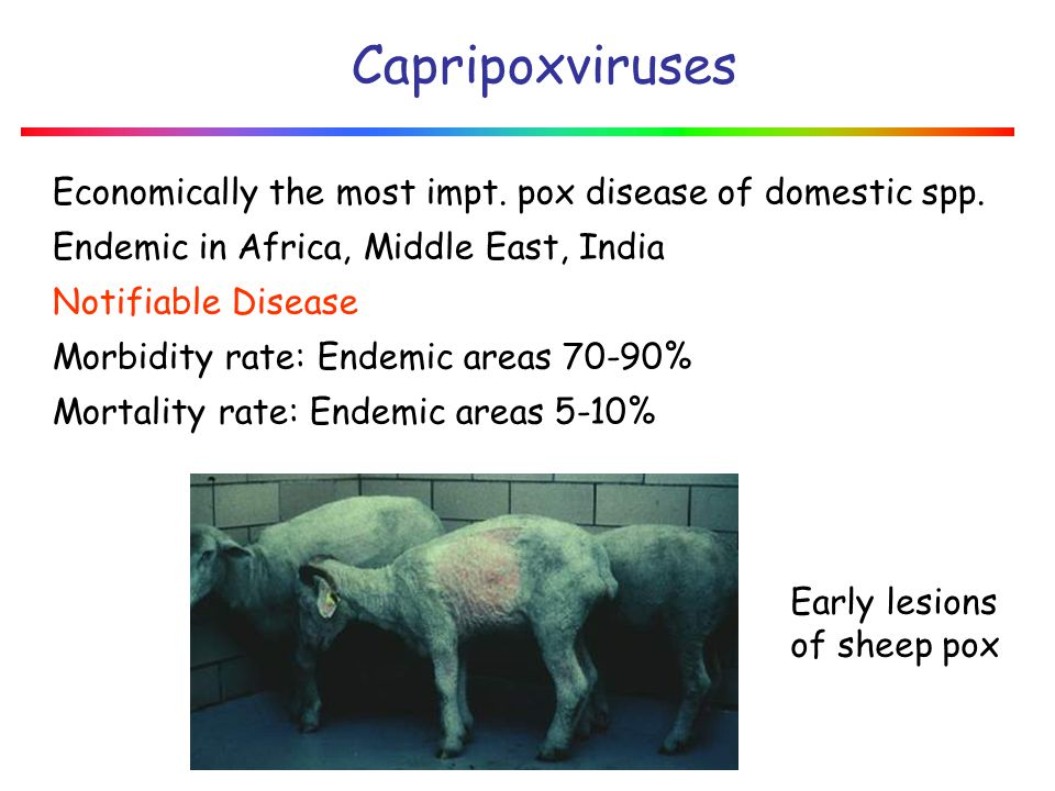 January 2008 Capripoxviruses. Economically the most impt. pox disease of domestic spp. Endemic in Africa, Middle East, India.
