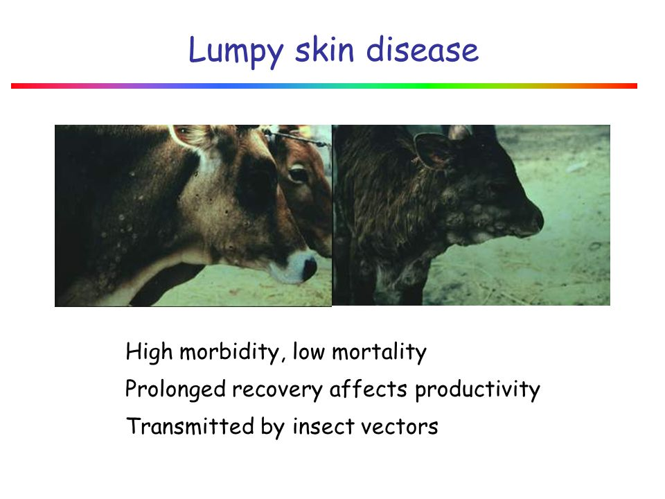 Lumpy skin disease High morbidity, low mortality
