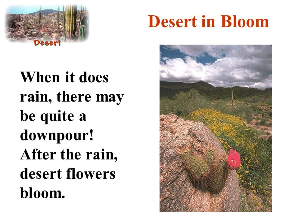 Desert in Bloom When it does rain, there may be quite a downpour.