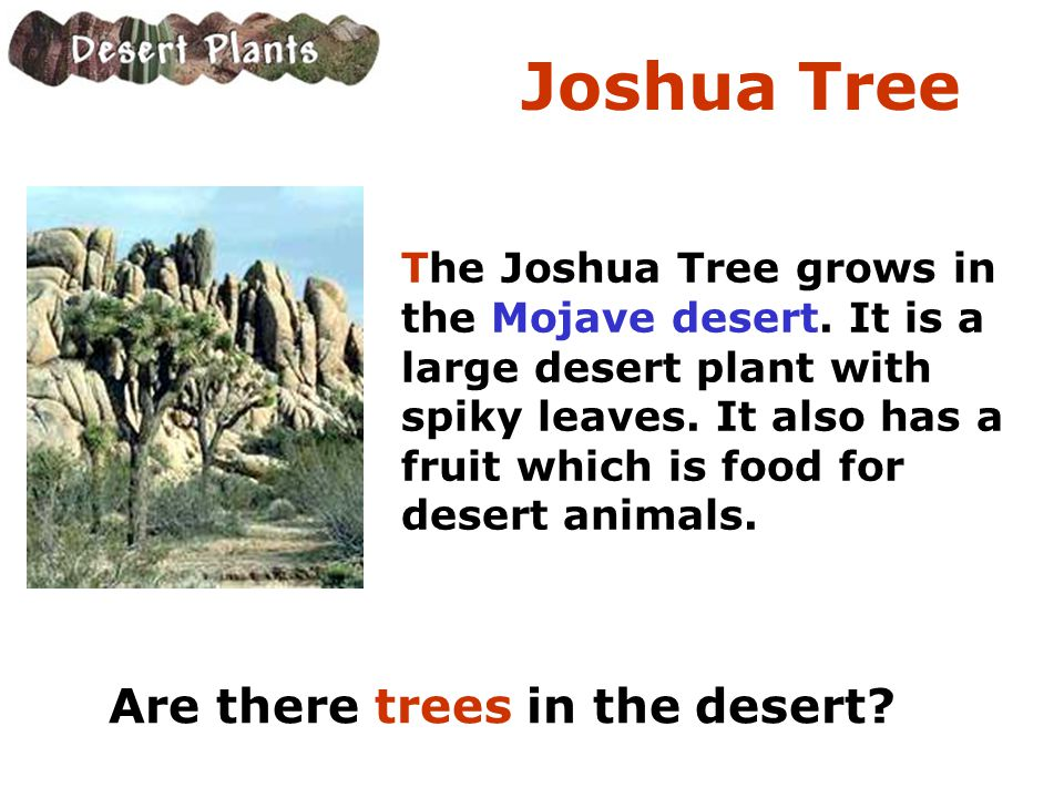 Joshua Tree Are there trees in the desert