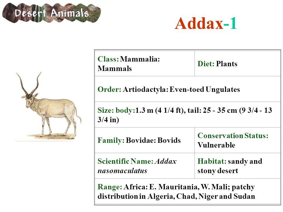 Addax-1 Class: Mammalia: Mammals Diet: Plants