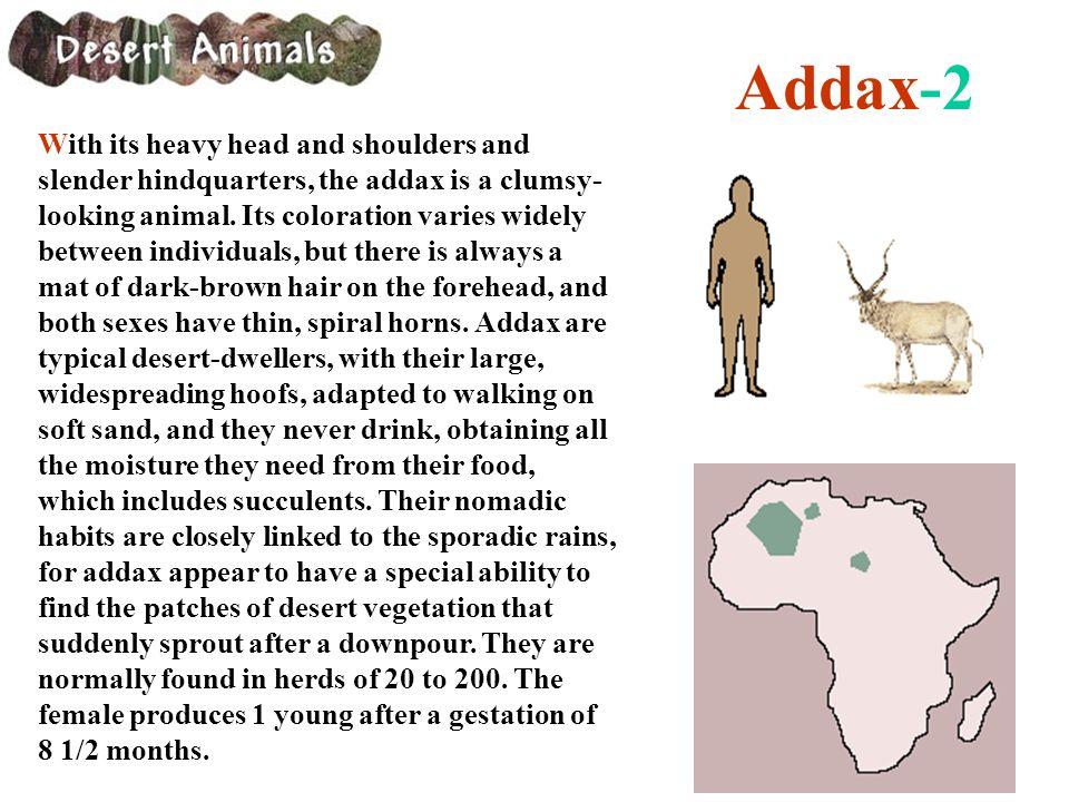 Addax-2