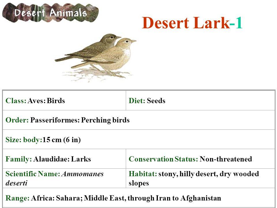 Desert Lark-1 Class: Aves: Birds Diet: Seeds