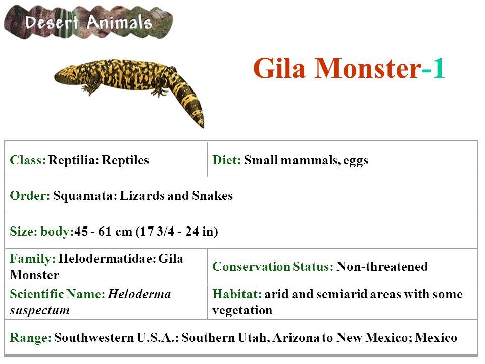 Gila Monster-1 Class: Reptilia: Reptiles Diet: Small mammals, eggs