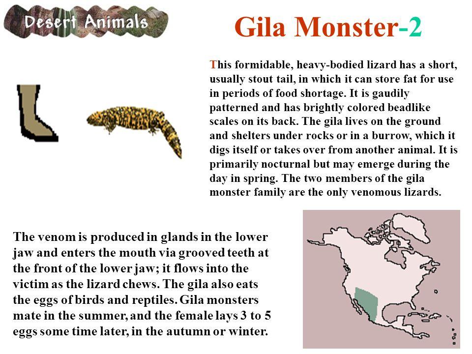 Gila Monster-2