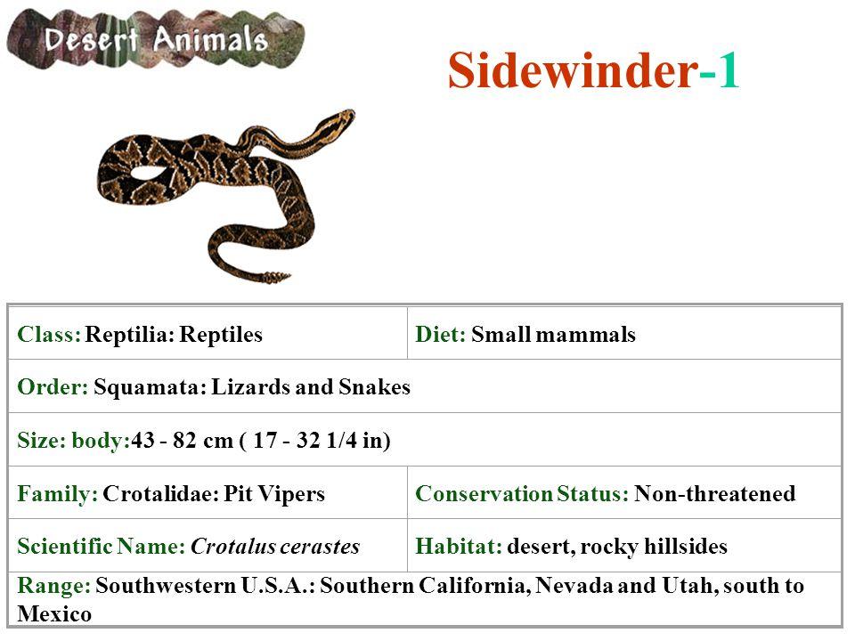 Sidewinder-1 Class: Reptilia: Reptiles Diet: Small mammals