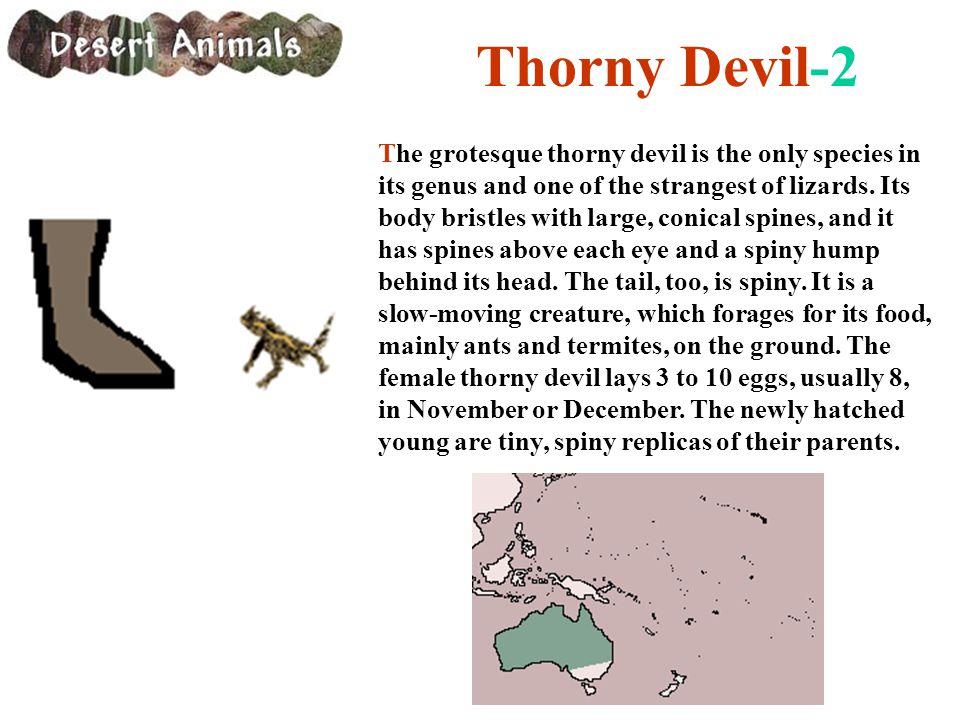 Thorny Devil-2