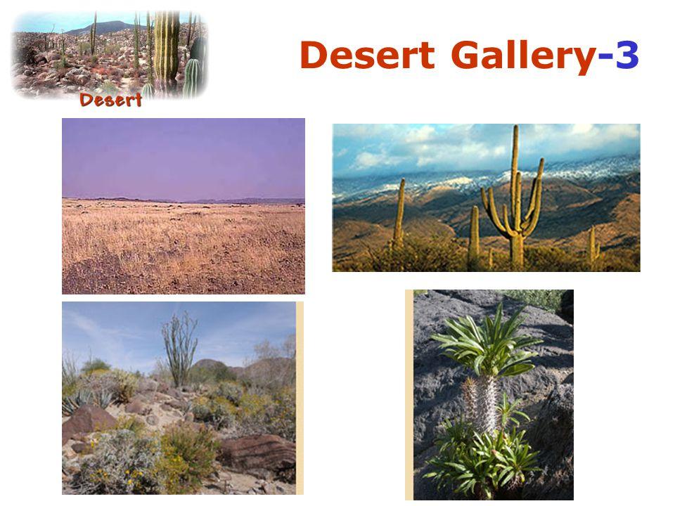 Desert Gallery-3