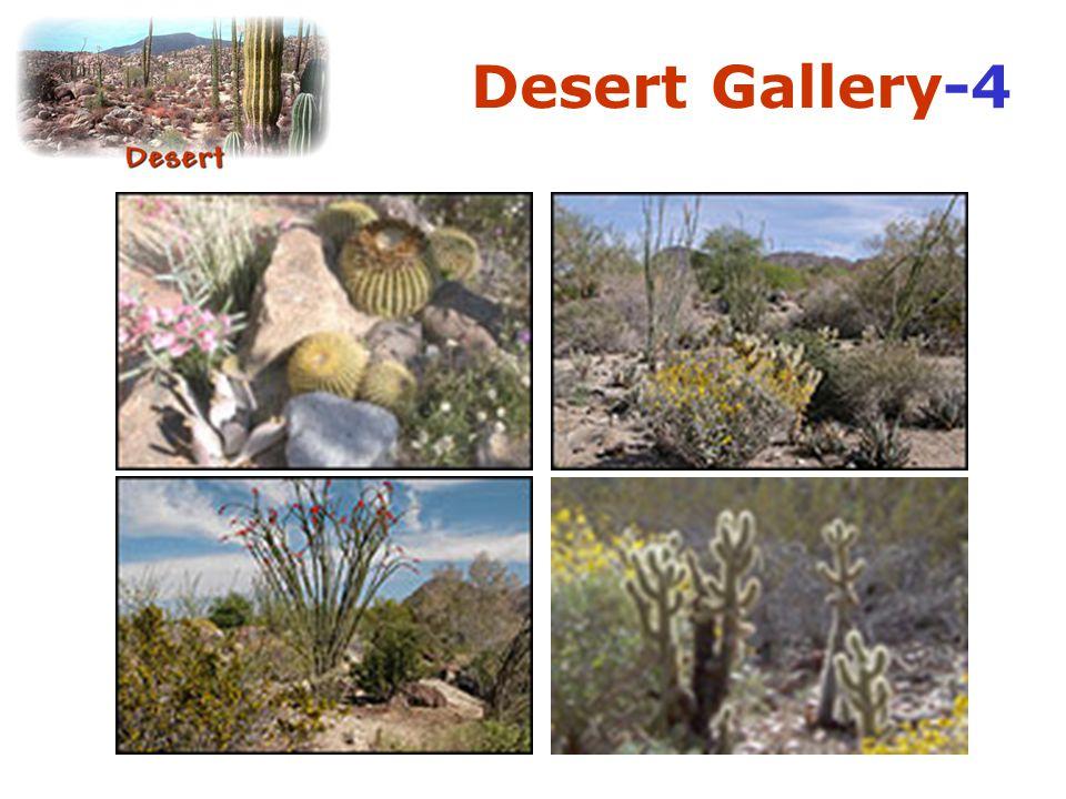 Desert Gallery-4