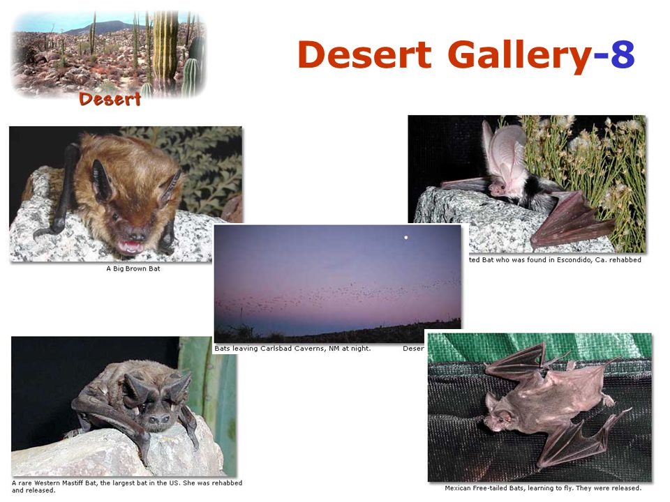 Desert Gallery-8