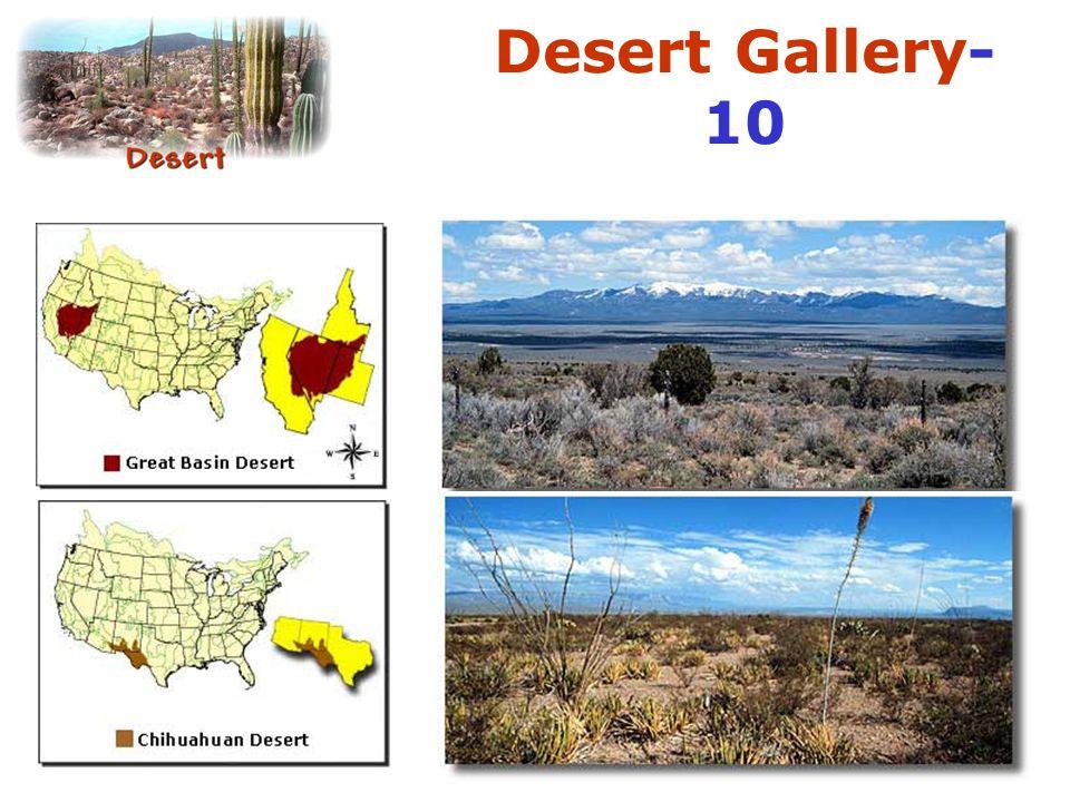 Desert Gallery-10