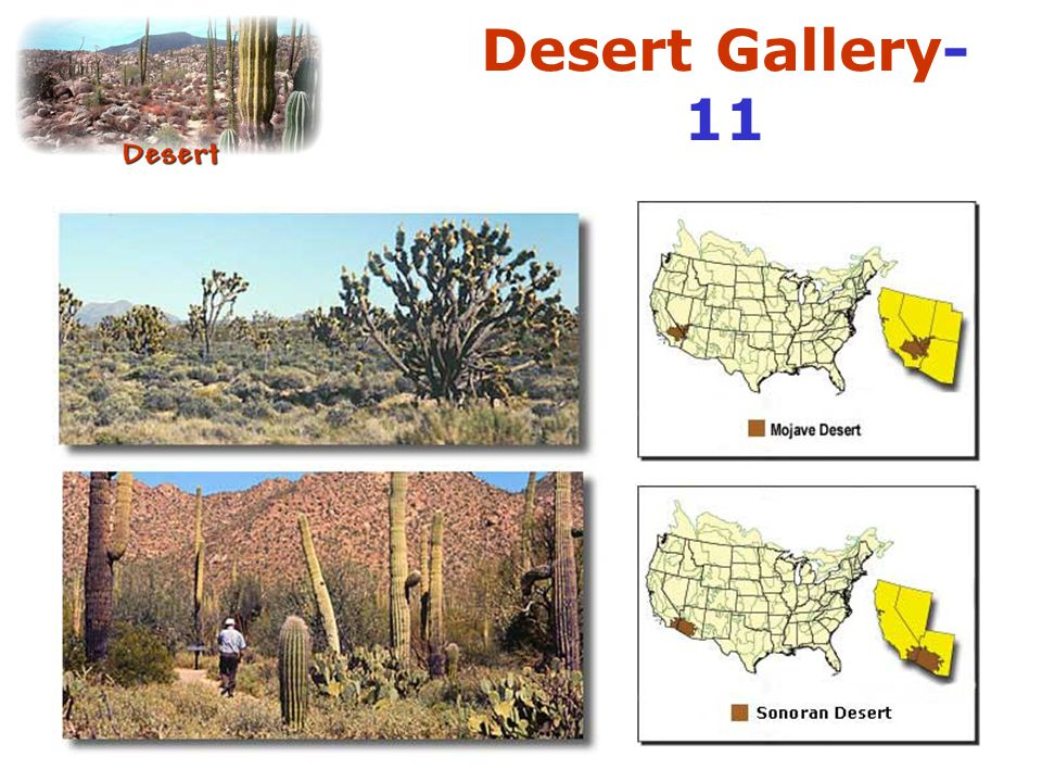 Desert Gallery-11