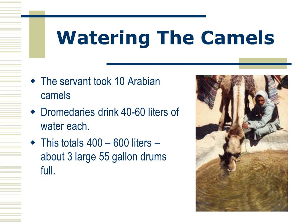 Watering The Camels The servant took 10 Arabian camels