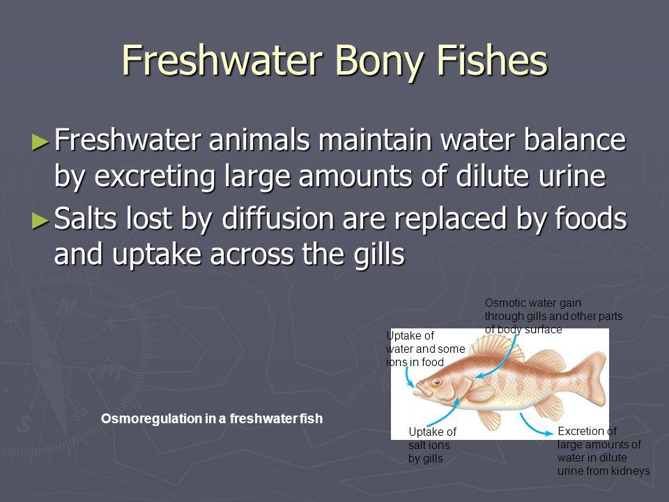 Freshwater Bony Fishes