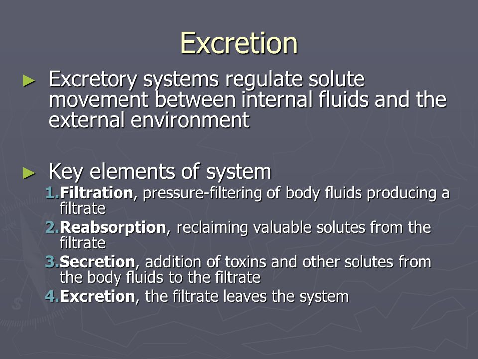 Excretion Excretory systems regulate solute movement between internal fluids and the external environment.