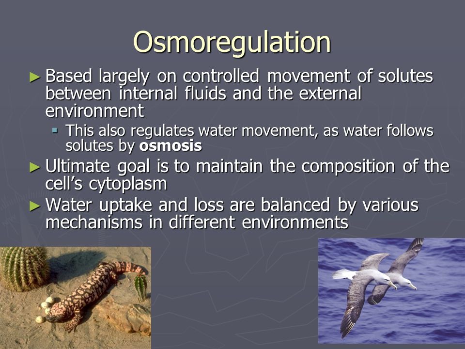 Osmoregulation Based largely on controlled movement of solutes between internal fluids and the external environment.