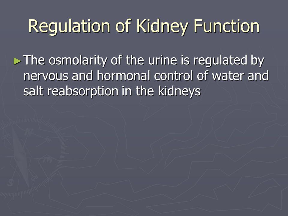 Regulation of Kidney Function