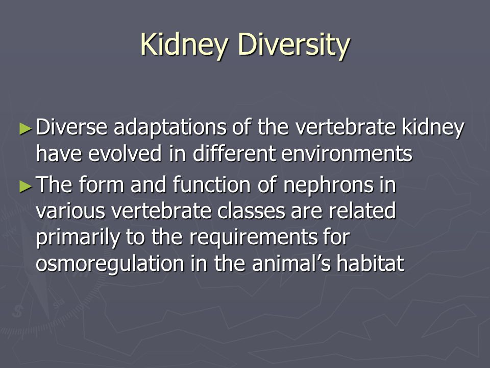 Kidney Diversity Diverse adaptations of the vertebrate kidney have evolved in different environments.