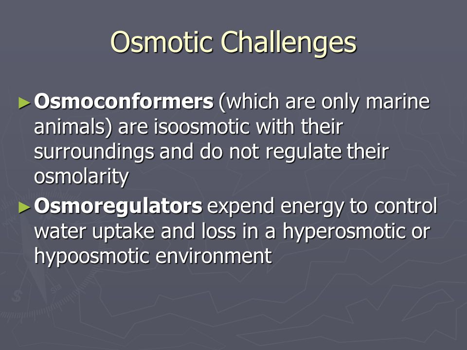 Osmotic Challenges Osmoconformers (which are only marine animals) are isoosmotic with their surroundings and do not regulate their osmolarity.